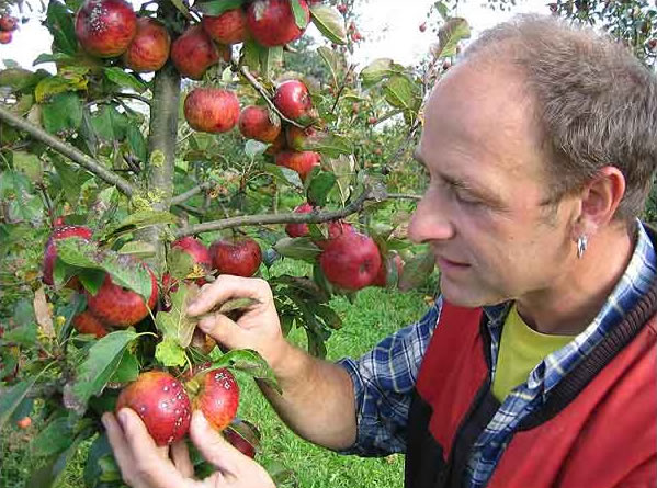 Obstbauberatung